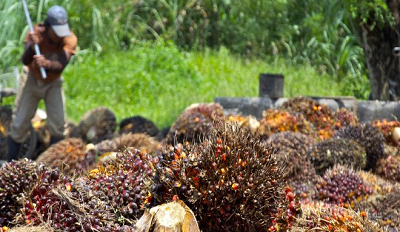 Image of palm oil farmer