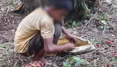 Child gathering palm oil fruit