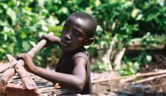 Child raking cocoa in Cote d'Ivoire